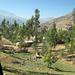 Tipico angolo con eucalipti salendo verso la Cordillera Negra