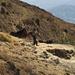Trebbiatura: si usa il vecchio sistema dei muli che calpestano la paglia; in alcune zone del Sud Italia viene ancora usato.