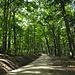 Der Fahrweg auf die Hochwacht, links im Wald ein Trail.