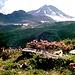 Alpenrosen auf dem Weg zur Edelhütte