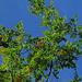 """""""Papi, der Himmel ist so schön blau. Kannst Du bitte den Himmel fotografieren?""""<br />""""Nur den Himmel?""""<br />""""Ja.""""<br />""""Aber hier im Wald geht das nicht.""""<br />""""Dann halt mit Bäumen.""""<br /><i>Papi zückt Fotoapparat - Klick - Kontrollblick -</i> """"Mmh - ist das gut so?""""<br /><i>Prüfender Blick -</i> """"Oh ja.""""<br /><br />So komme ich zu diesem durchaus gelungenen Bild """"leuchtendes Spätsommerlaub"""" (senkrecht nach oben), welches ohne Anregung meines Sohnes nicht existierte...<br />"""