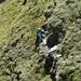 Im Aufstieg zum Südgrat der Wissi Frauen - [u Lena] im steilen Gras