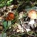 und überall hat es Pilze