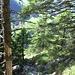 Bergpfad im Abstieg; im Hintergrund der Wanderweg Richtung [p Sattelegg].