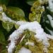 Garten im Winter (=Wintergarten?)