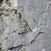 Markante Eigenschaft diese Klettersteiges, die zahlreichen Eisentreppen