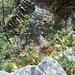 La scalinata che porta al torrente dopo Moscioi vista dall'alto