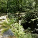 """Die Steinbrücke """"Ponte Cane"""" - im Dickicht kaum mehr zu sehen"""