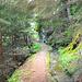Später führt der Weg durch Wald...