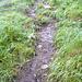 Stelle, an der ich umkehrte .. meine Rutschspuren sind in der unteren Bildmitte zu erkennen - das Gras bot bei der unglaublichen Nässe leider auch keinen Halt