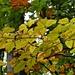 Herbstwald oberhalb von Wildhaus