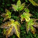 Ein Hauch von Herbst liegt in der Luft. Zu Beginn führt die Route durch Berwald