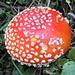 Diavolina-Pilzchen...natürlich in der Farbe