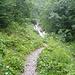 Weg zur Bachüberquerung - oben die Stelle, die es eigentlich zu überqueren gilt