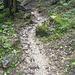 ein Bächlein fließt den Weg hinunter
