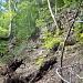 Bielstein, eine schrofige Steilwand mitten im Wald.