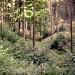 Einsame geheimnisvolle Wälder im Deister