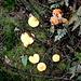 Die bunte Welt der Pilze