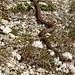 was ist das für eine Schlange? Gesehen auf der Alp Muragl