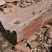 Ein versteinerter Baumstamm :-)