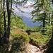 Im Lärchenwald