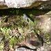 Val d'Ambra - auch an die durstigen Seelen wird gedacht