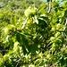 Val d'Ambra - bald sind die Kastanien reif