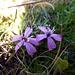 Der Herbst überrascht mit farbigen Blütentupfern