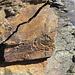 a rock wound