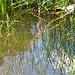 Frosch in der Bildmitte