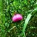 Flora und Fauna II