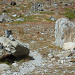 Hier der sehr unscheinbare Abzweiger zum Einstieg des Klettersteiges Jegihorn