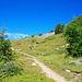 Schon rasch zweigt man nach rechts auf schwache Pfadspuren vom Mountainbikeweg ab. Geradeaus könnte man zur Oberen Guggerhubel gelangen, aber dann wird man viele Mountainbiker treffen!
