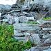 Alpe Piatto im Valle di Bri - das muss eine stolze Alp mit etwa 6 Hütten gewesen sein
