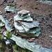Aufstieg zur Alpe Piatto im Valle di Bri - bin ja gar nicht der Erste