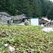 Freude herrscht - die zerfallenden Hütten von Malsegro im Val d'Ambra werden kunstvoll renoviert