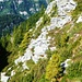 Zwischen Alpe Piatto und Bocchetta - je höher desto weniger Erlen, dafür Felsen