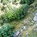 Zwischen Alpe und Bocchetta di Piatto - Webfragment durch den Erlenhain