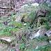 Zwischen der unteren und oberen Alpe Piatto - überwachsene Steintreppe bestätigen meine Routenwahl
