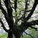 wunderbarer Baum mit Farn und Flechten...