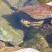 Fischli im Seekarsee