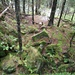 ... und ebensolche Waldimpressionen