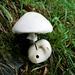das feuchte Klima lässt die Pilze wachsen
