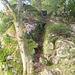 Der Kamin am Felsen beim östlichen Seeufer. Er ist voller Erde und erreicht höchstens den 2. Grad.