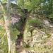 Der Kamin am Felsen beim östlichen Seeufer