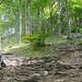 Im Wald etwas oberhalb des Gasthauses - links der Wanderweg zum Gipfel, rechts gehts innerhalb kurzer Zeit zur Bank