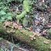 und immer wieder dient auch sogenanntes Totholz als Unterlage für Wachstum