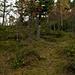 Im Aufstieg durch den Wald zum Bleikenchopf