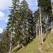 Abstieg über sehr steiles Wiesengelände