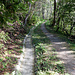 Zum Schluss gemütlicher Waldweg